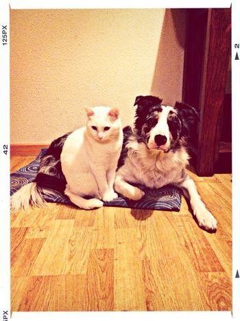 Best Friends Lovelovelove Movilgrafias Iphone5s