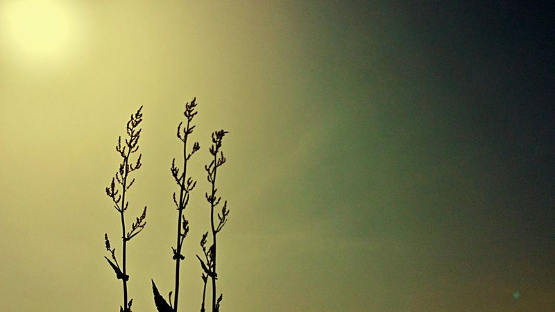 Risaie Sun Sole