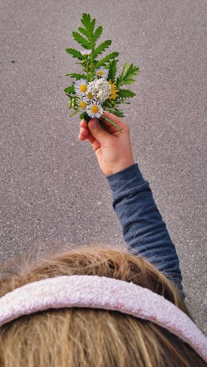 Girl Weeds Are Beautiful Too Human Hand Low Section Flower Child Childhood Directly Above High Angle View Close-up Personal Perspective Blooming Flower Head Flower Arrangement In Bloom Bunch Of Flowers