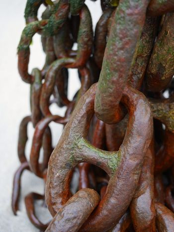 Nautical Rusty Chains Cornwall Harbour Close-up