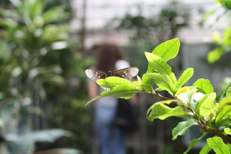Angel Wings Animal Themes Animal Wildlife Animals In The Wild Beauty In Nature Beauty In Nature Butterfly Close-up Day Focus On Foreground Fragility Freshness Funny Perspective Green Color Growth Insect Leaf Nature One Animal One Person Outdoors Perspective Photography Plant Playing With Perspective Tree