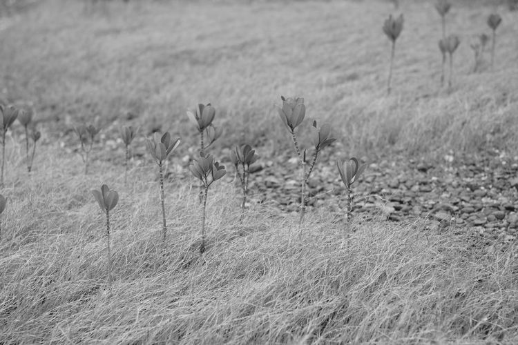 Close-up of plants on field