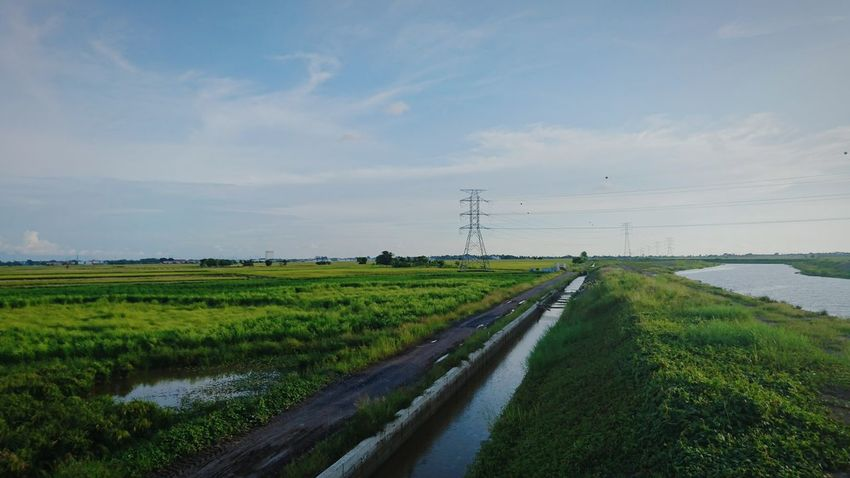 Agriculture Rice Paddy Field Cloud - Sky At Alor Setar Malaysia Sony Xperia Z5 Green Color