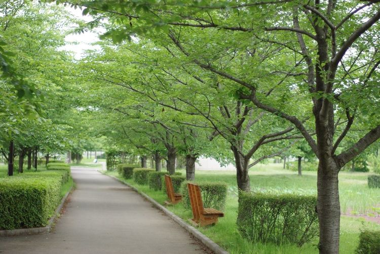 Green Park Nature_collection