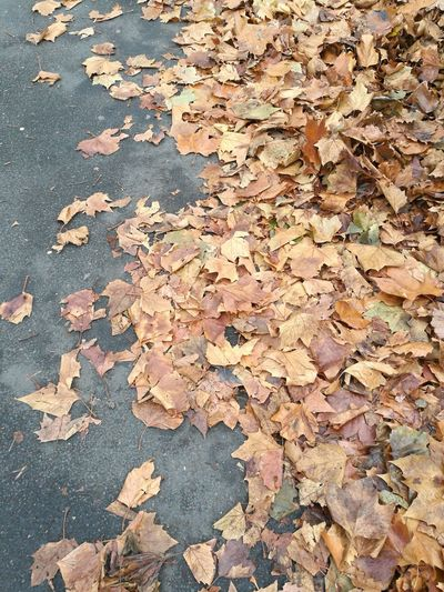 Background Sidewalk Pavement No People Backgrounds Leaf Autumn Full Frame High Angle View Textured  Close-up Fall Dried Change Leaves Autumn Collection Fallen Leaf Wilted