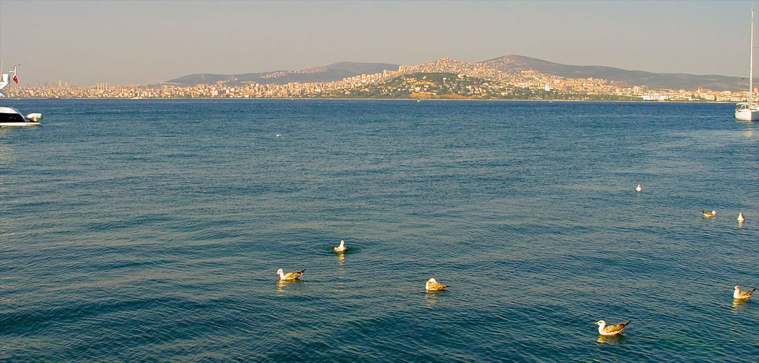 Animals Animals On Water Beauty In Nature Boats⛵️ Ducks Istanbul From The Sea Nature No People Outdoors Scenics Sea Sky Water Sea And Sky Sommergefühle