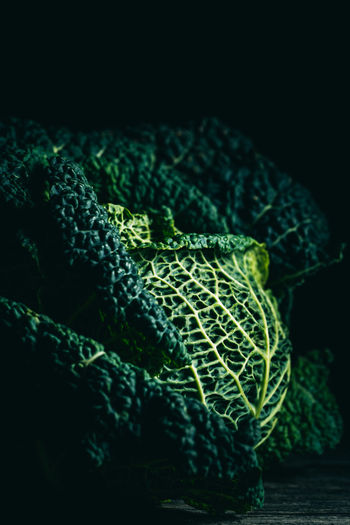 savoy close up dark mood Green Color Indoors  Close-up No People Still Life Vegetable Cabbage Healthy Eating Leaf Freshness Black Background Savoy Food Food Photography Foodphotography Texture Light And Shadow Nikonphotography Pattern Studio Shot Plant Part Dark Mood
