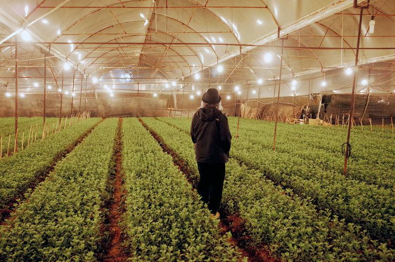 Rear view of man working in farm