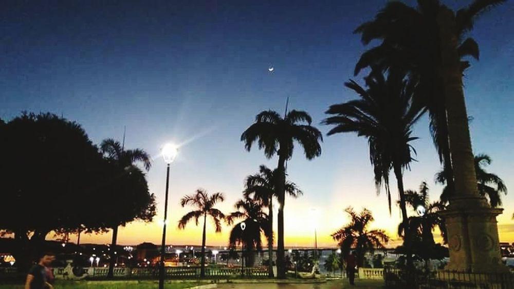 Praça Gonçalves Dias Palm Tree Tree Sky Silhouette Sunset Outdoors Vacations