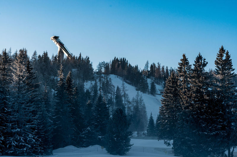 Beauty In Nature Blue Christmas Tree Clear Sky Cold Temperature Day Forest Nature No People Outdoors Ski Ski Jumping Sky Snow Tree Winter