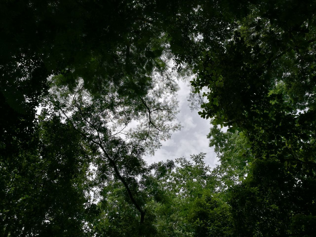 tree, nature, growth, beauty in nature, low angle view, forest, outdoors, no people, tranquility, day, scenics, branch, sky