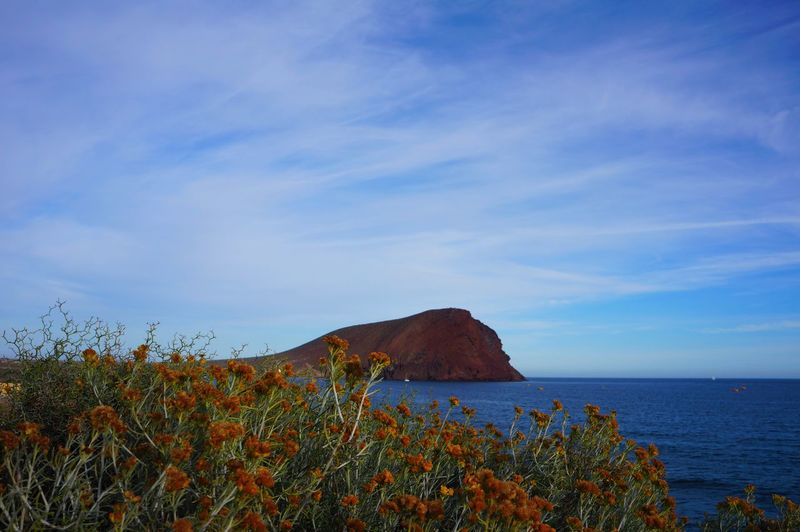 Nature Blue Sea Beauty In Nature Plant Scenics Outdoors Flower Landscape Growth No People Mountain Beach Sky Water Day Tenerife Vacations Horizon Over Water Travel Nature Beauty In Nature Tranquility Montaña Roja