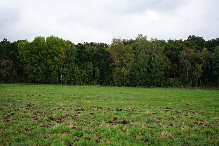 Scenic view of trees growing on field against sky
