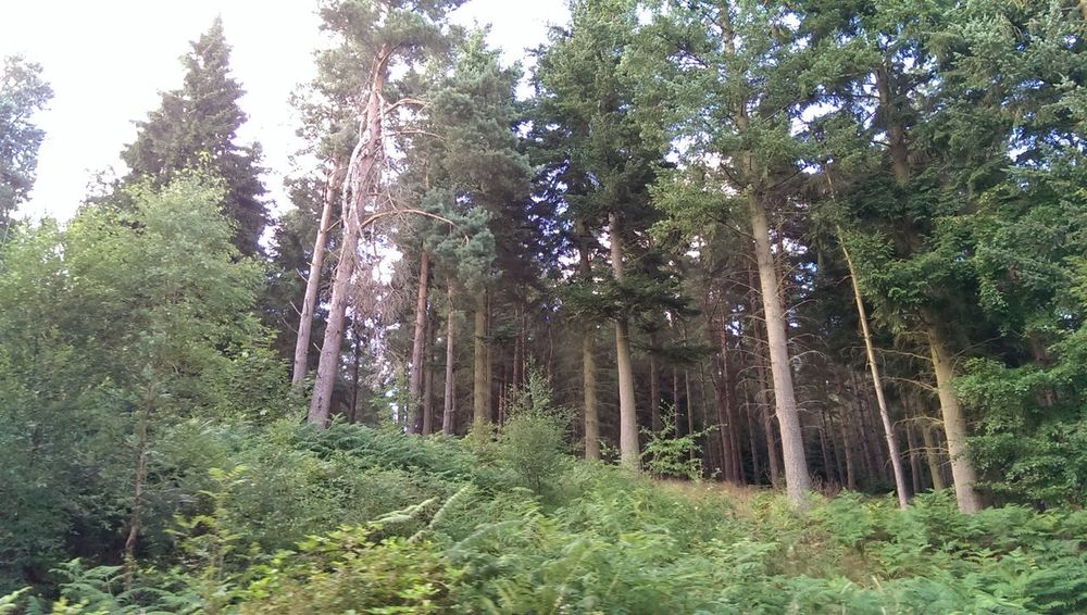Forest Green Growth Low Angle View Nature Non-urban Scene Outdoors Tall - High Tree Tree Area Tree Trunk