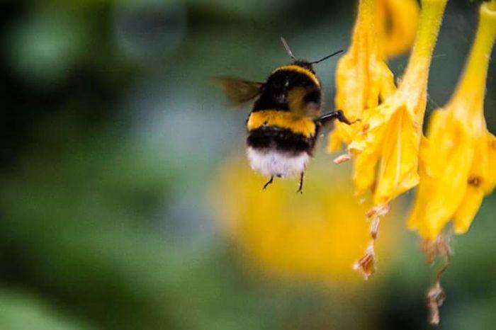 Outside Spring Bielefeld Botanical Garden Botanic Colorsofspring Yeah Springtime! Canon700D Springtime Bumblebee Bumblebee On Flower