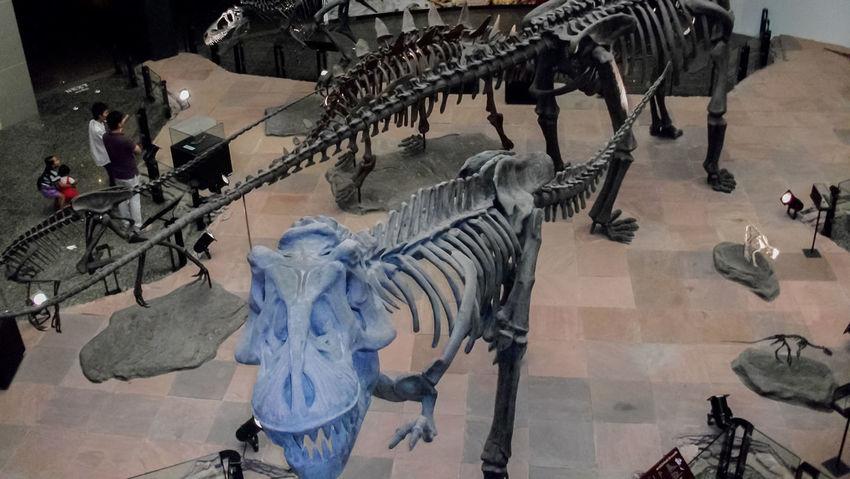 Animal Animal Body Part Animal Head  Animal Photography Animal Themes Animal Wildlife Animals Animals In The Wild Bone  Bones Day Dinosaur Dinosaur Bones Dinosaur World Dinosaure Dinosaurier  Dinosaurio Dinosaurios Dinosauro Dinosaurs DinosaursAroundTheWorld Dinosaurus Dinossauro Museum Museums