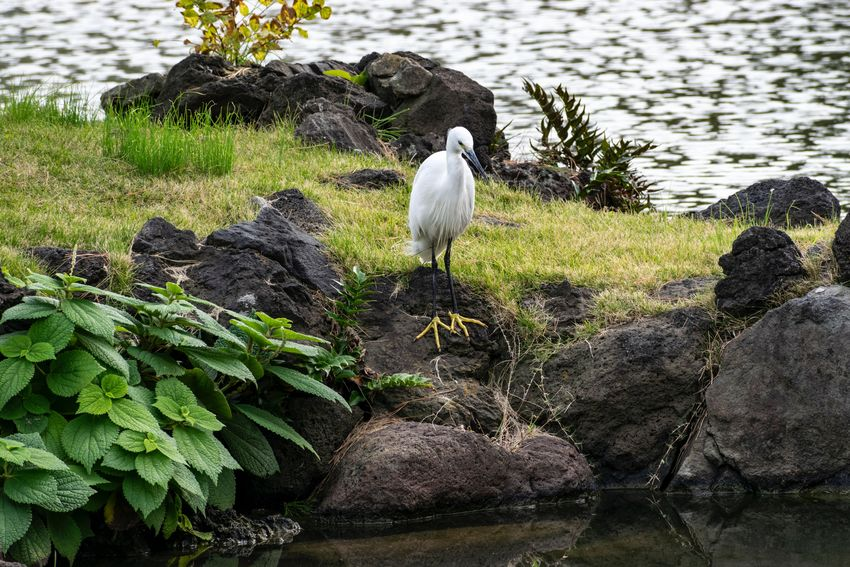Animal Themes Animal Water Bird Vertebrate Animals In The Wild Animal Wildlife Day Nature No People Lake Plant Perching One Animal Rock Full Length Rock - Object Green Color