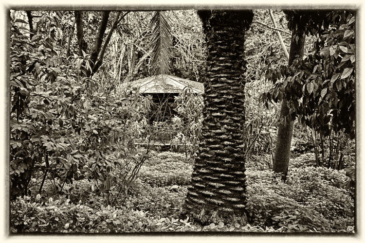 National Garden. Black & White Botanical Gardens Plant Plants Plants 🌱 Beauty In Nature Black And White Blackandwhite Blackandwhite Photography Botanical Botanical Garden Botany Day Field Grass Growth Landscape Nature No People Outdoors Plant Plants And Flowers Tranquility Tree Tree Trunk