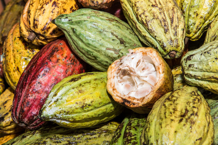 Colourfull reaped peeled cocoa and cocoa fruits ready for cocolate manufacturing.