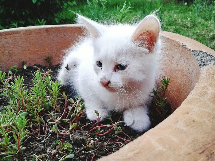 Close-up of little kitten sitting in pot