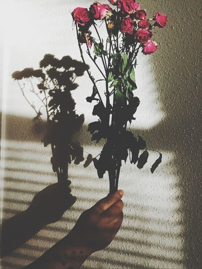 Human Hand Fragility Life Death Circleoflife Flower Growth Human Body Part Hand Shadows & Lights Artistic Expression Light And Shadow Perspective Evening Glow
