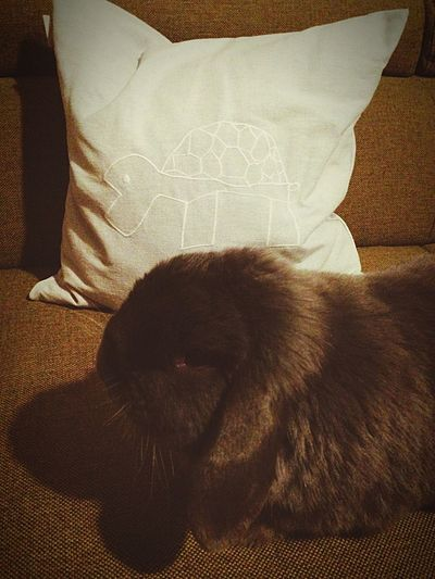 Flauschig!♥ Lovely Bunny My Love Cute