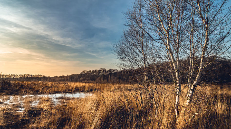 Water Sky Tree Plant Scenics - Nature Tranquility Tranquil Scene Beauty In Nature Cloud - Sky Lake Bare Tree Land No People Nature Landscape Non-urban Scene Environment Grass Remote Outdoors Veluwe