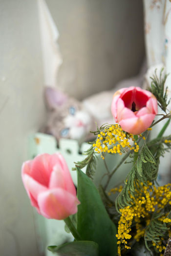 happy meow boy Close-up Day Flower Indoors  Kitten Mimosa Nature No People Plant Postcard Tulip