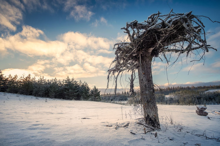 Dead tree trunk is planted upside down for insects with winter morning mood. This is insects hotel. Finland Morning Light Nature WoodLand Bare Tree Beauty In Nature Cloud - Sky Cold Temperature Day Hotel Insects  Landscape Nature No People Outdoors Roots Sky Snow Tranquil Scene Tranquility Tree Trunk Upside Down Weather Winter