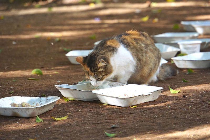 Cat Smelling Leftover Food