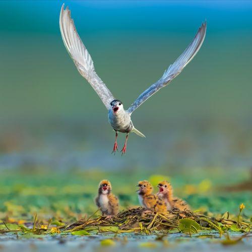 早上好! Bird Bird