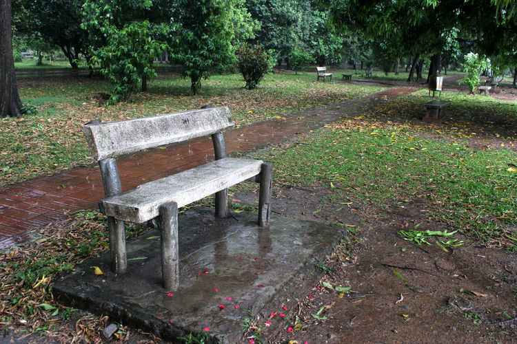 Plant Tree Seat Bench Nature Park Growth Green Color Grass Day Tranquility Park - Man Made Space No People Empty Park Bench Outdoors Land Field Garden