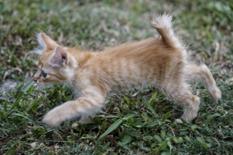 Animal Animal Themes Mammal One Animal Domestic Pets Domestic Animals Grass Vertebrate Cat Domestic Cat Feline No People Plant Land Nature Day Side View Field Selective Focus Profile View Ginger Cat