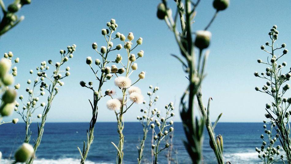 Landscapebeach Vegetation Nature Horizon Calahonda Malaga Andalucía Spaın Sea Sea And Sky