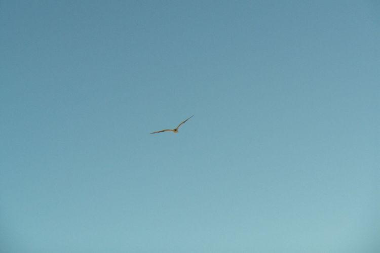 Copy Space Bird