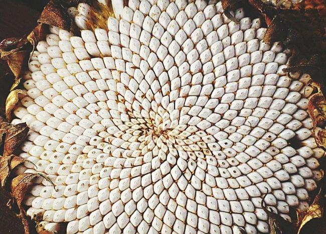 Pattern Pieces Sunflower Depth Of Field Deceptively Simple EyeEm Best Shots Eye4photography  Getting Inspired EyeEm Gallery