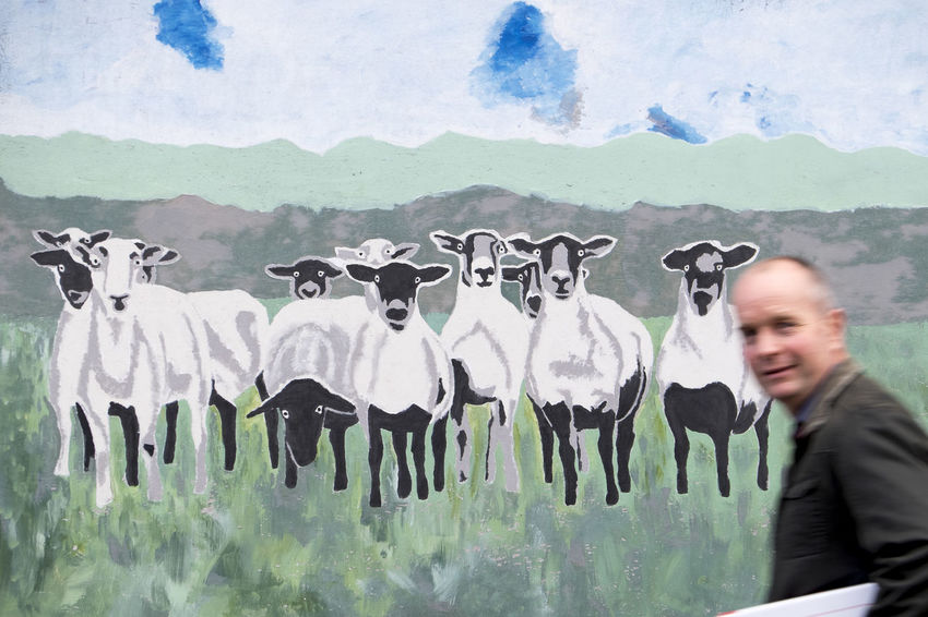 Sheep mural, Kington, Herefordshire Graffiti Mural Painting Sheep Streetphotography
