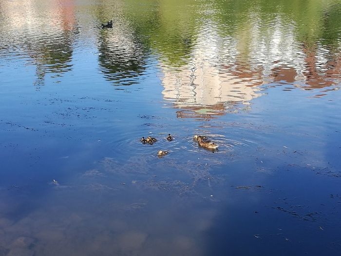 Reflection Nature Nature Photography Naturelovers Ducks Canards Animal Themes Animals In The Wild Animaux Animaux Sauvages Reflet Dans L'eau Water Reflections Countryside Campagne River Riviere Water Swimming Bird Lake Sky