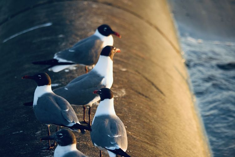 High angle view of seagulls perching on sea shore