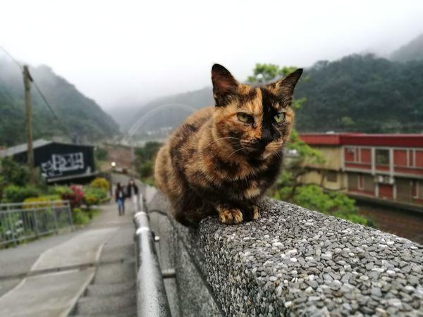 Cats Catslife Houtong Houtong Cat Village Taiwan First Eyeem Photo FirstEyeEmPic