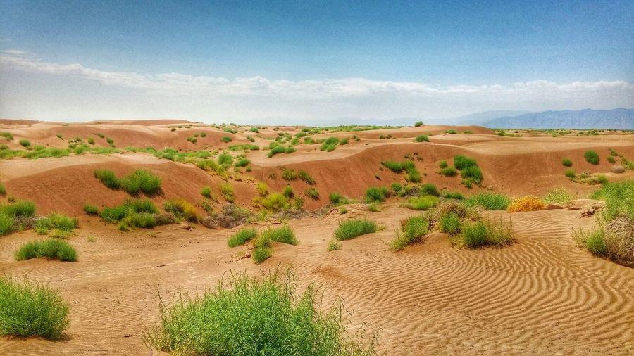 Dunas de arena Dunes Sand Coahuila, México Landscape Hdr_Collection
