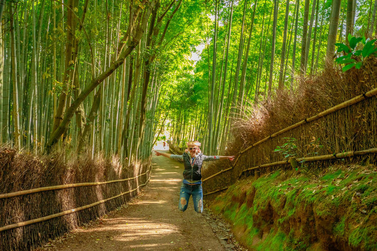 tourist woman jumping in bamboo forest at Sagano in Arashiyama, kyoto, japan. Travel asia concept. Freedom and enjoying concept. Kyoto's popular landmark and touristic destination. Surreal path in bamboo grove at Sagano in Arashiyama, sunlit. The forest is Kyoto's second most popular tourist destination and among the 100 phonetic stations in Japan. Meditative listening concept. Arashiyama Arashiyama Bamboo Grove Arashiyama Bamboo Forest Bamboo Grove Japan Japan Photography Japanese  Japanese Food Japanese Garden Kyoto, Japan Path Tourist Tree Woman Adult Arashiyama Bamboo Groove Arashiyamabambooforest Arashiyamabamboogrove Bamboo Bamboo - Plant Day Direction Footpath Forest Forest Fire Full Length Green Color Growth Kyoto Kyoto Garden Kyoto,japan Land Men Nature One Person Outdoors Plant Standing The Way Forward Tree Walking WoodLand