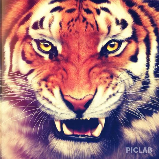 this is my favourite animal because they are strong, independant and feirce Tiger Wild Beautiful Independent