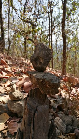 Rock Rock - Object Nature Day Tranquility Tree Outdoors No People Forest
