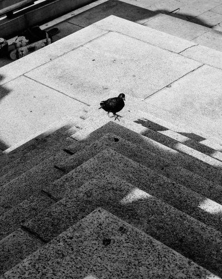 EyeEm Brasil EyeEm Streetphotography Street Photography Fotografia De Rua B&w Photography B&w Street Photography Black & White Preto & Branco P&B Design Geometric Shapes GeometryLinesEveryday Street Sao Paulo - Brazil São Paulo Brasil Brazil