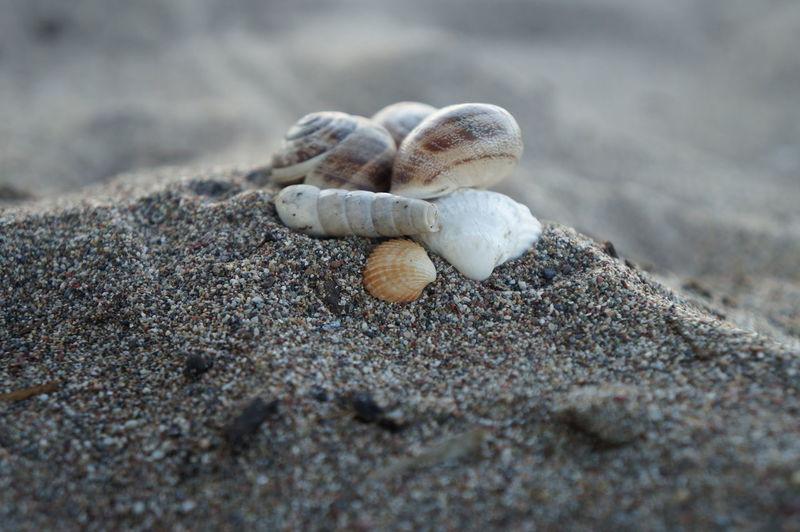 Close-Up Of Various Seashells On Sandy Beach