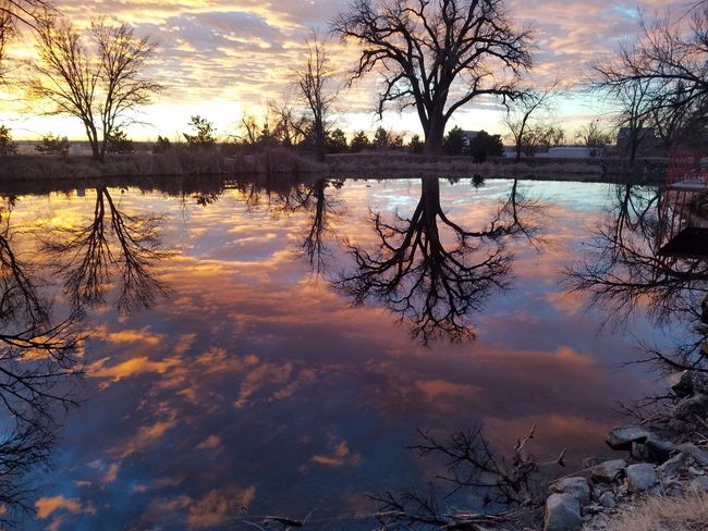 Reflection Lake Water Standing Water Nature Sky TreeTranquility Silhouette Cloud - Sky Symmetry Tranquility Reflecting Pool Sunset Outdoors Beauty In Nature Silhouette No People Scenics Puddle Day USA Tranquil Scene Tree Beauty In Nature