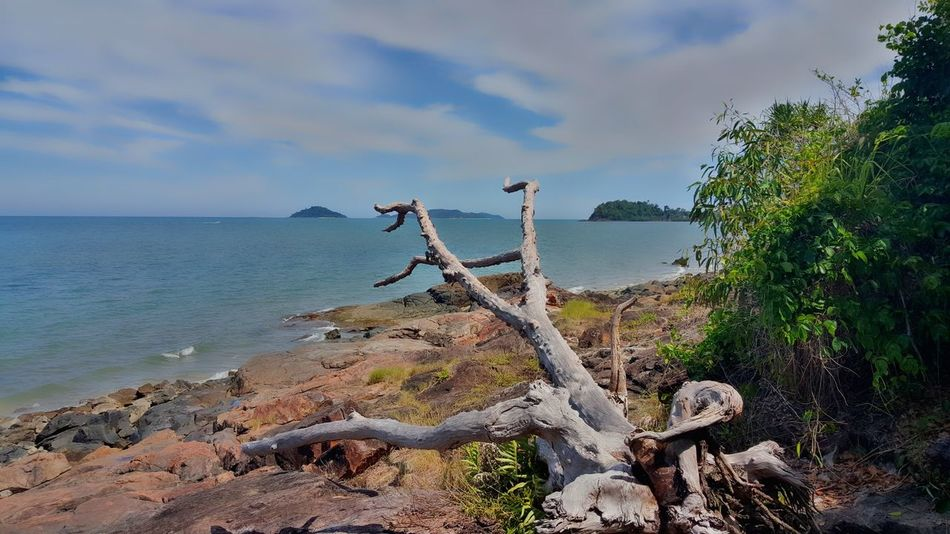 View from walking by The Kennedy Track at Mission Beach Qld Australia Tree Stump Rocks Horizon Over Water Horizon Sea Sky Nature Cloud - Sky Outdoors Day No People Beach Tranquility Horizon Over Water Tree Beauty In Nature Water
