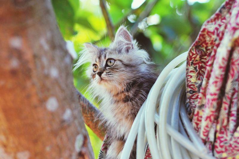 Animal Themes Cat Lovers Cats Of EyeEm Cats 🐱 Kitten 🐱 Portrait Close-up Cat Kitten Domestic Cat Animal Eye Yellow Eyes Tabby Cat Siamese Cat Persian Cat  Feline