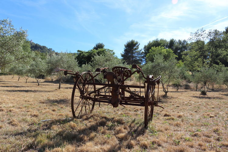Agriculture Nature Beauty In Nature Tree Tractors Paysan Siege Tracteur Outdoors Agriculture Olivier Olives Branch Arbres Olive Tree Olive Blue Plant